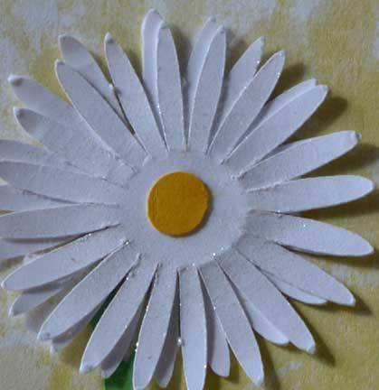 shimmer_daisy